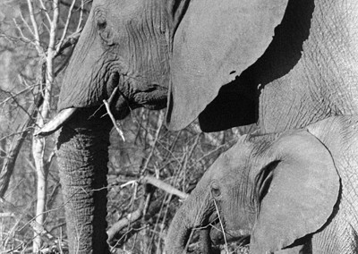 baby_mom-elephant2