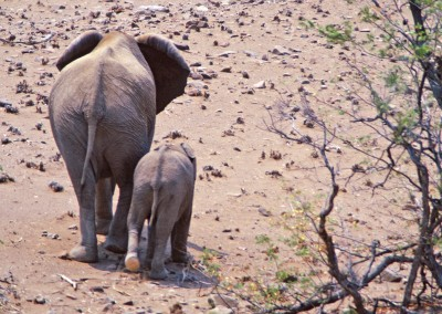 elephant-mom-baby-butts