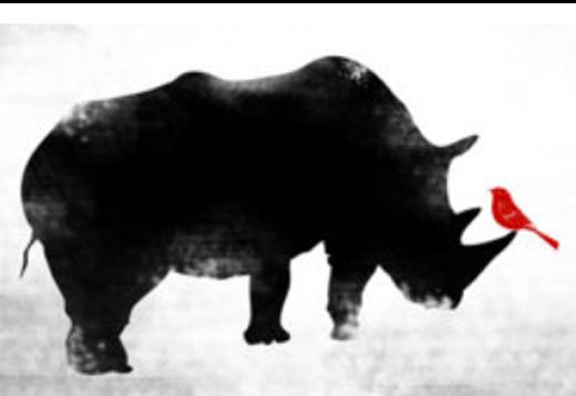 Black Rhino Photography